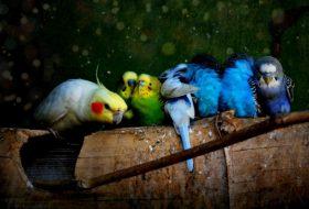 Muhabbet kuşu eğitiminde dikkat edilmesi gereken 5 kural