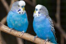 Kuşlarda Hastalık Belirtileri