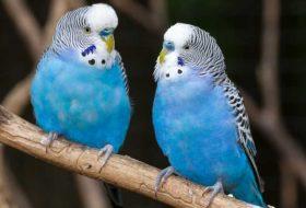 Kuşlarda Hastalık Belirtileri Nelerdir? Nasıl Korunur?