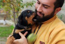 Yavru Köpek Eğitimi İçin 7 Altın Kural