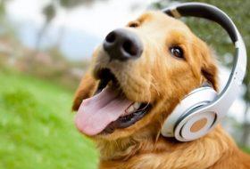 Kedileri ve Köpekleri Huzura Erdiren Müzikler