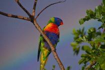 Papağan Bakımı ve Eğitmi