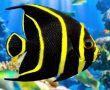 Sağlıklı Balık Bakmanın 4 Temel Kuralı