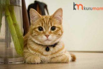 Sindirim Sorunu Yaşayan Kediler İçin En İyi 5 Kedi Maması