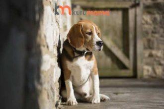 Sindirim Sorunu Yaşayan Köpekler İçin EN İYİ 5 Köpek Maması