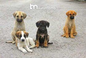 Sokak Köpekleri Ne Yer: En Ucuz 5 Sokak Köpeği Besleme Yöntemi