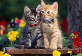 Kedinizle Daha Güzel Nasıl Vakit Geçirebilirsiniz?