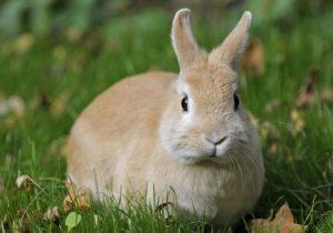 Tavşan bakım ürünleri