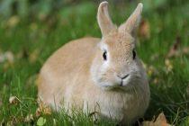 Tavşan Bakım Ürünleri Nelerdir? Tavşan Bakım Malzemeleri