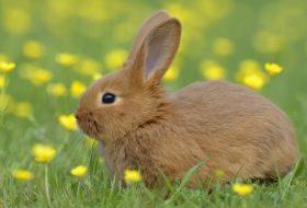 Tavşan Bakımının 10 Kuralı
