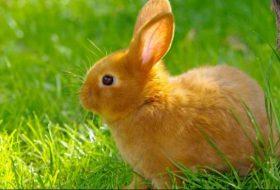 Tavşan Nasıl Beslenir?