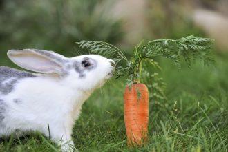 Tavşan yemleri