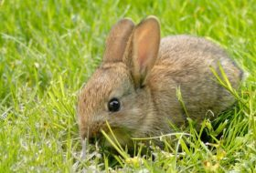 Tavşanların günlük bakımı nasıl yapılır?