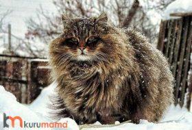 Tüy Dökülme Sorunu Yaşayan Kediler İçin EN İYİ 5 Mama
