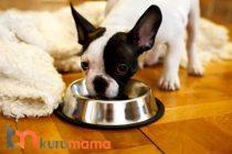 Köpeklerde Cilt Sorunları İçin En İyi 5 Deri Hassasiyeti Köpek Maması