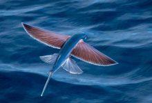 Balıklar Hakkında İlginç Bilgiler