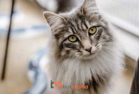 Yaşlı Kedilerde Beslenme: En İyi 5 Yaşlı Kedi Maması