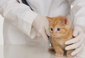 Yavru kedi alırken nelere dikkat etmeliyiz?