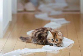 Yavru bir kediyi eğitmek mümkün mü?