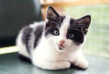 En iyi yavru kedi mamaları