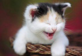 Yavru kedi maması seçerken