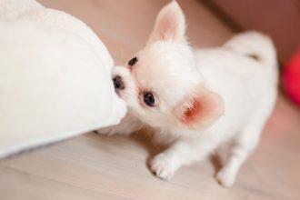 Yavru köpek maması
