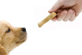 Yavru Köpek Maması Markaları ve Yavru Köpek Bakımı