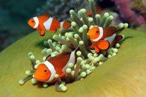 Yemlenmiş Balıklar